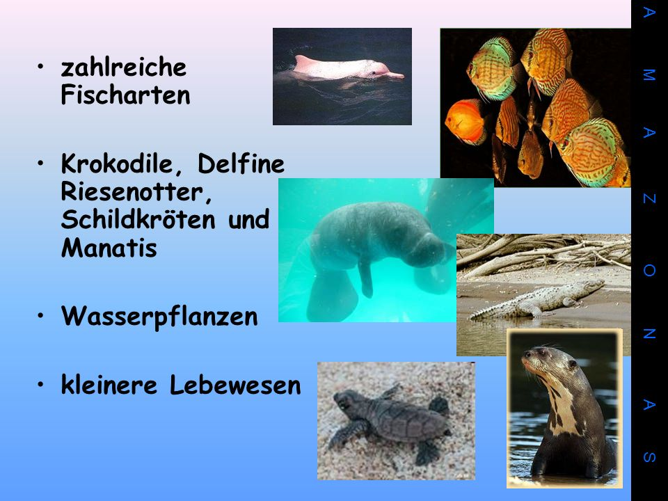 zahlreiche Fischarten