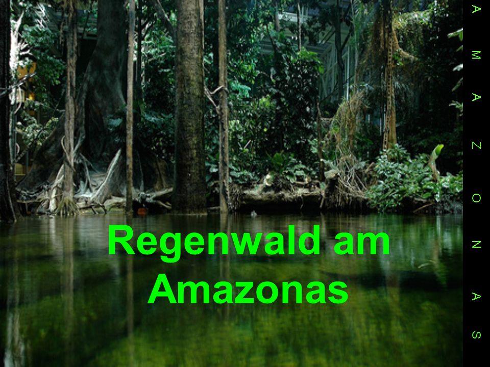 A M A Z O N A S Regenwald am Amazonas.