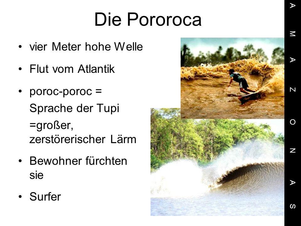 Die Pororoca vier Meter hohe Welle Flut vom Atlantik poroc-poroc =