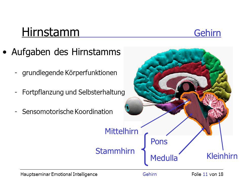 Hirnstamm Gehirn Aufgaben des Hirnstamms Mittelhirn Pons Stammhirn