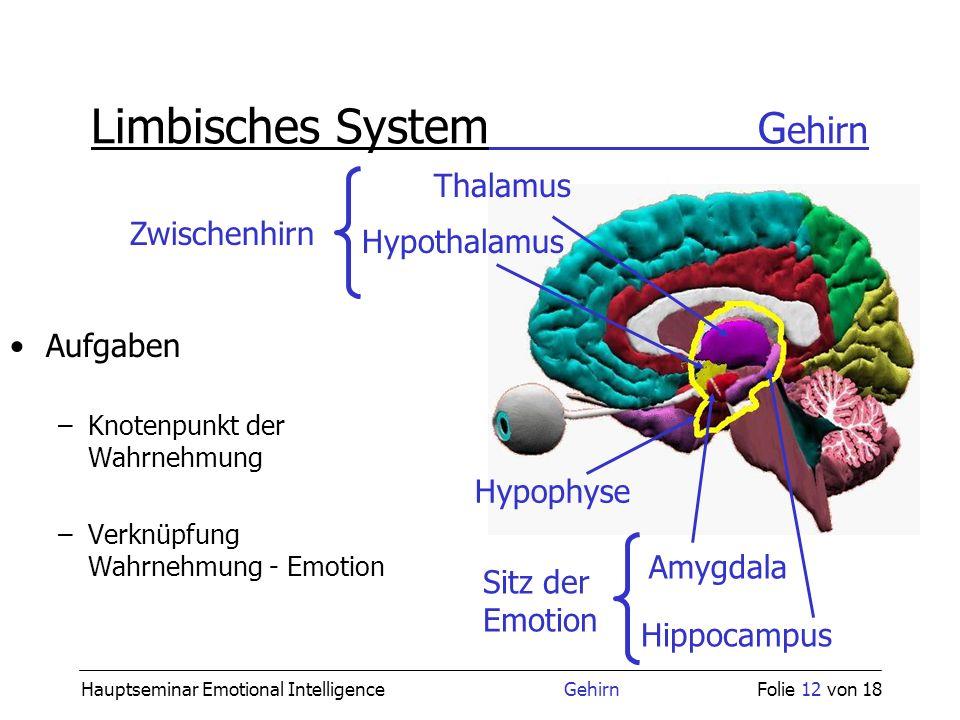Fein Anatomie Des Limbischen Systems Zeitgenössisch - Anatomie Von ...