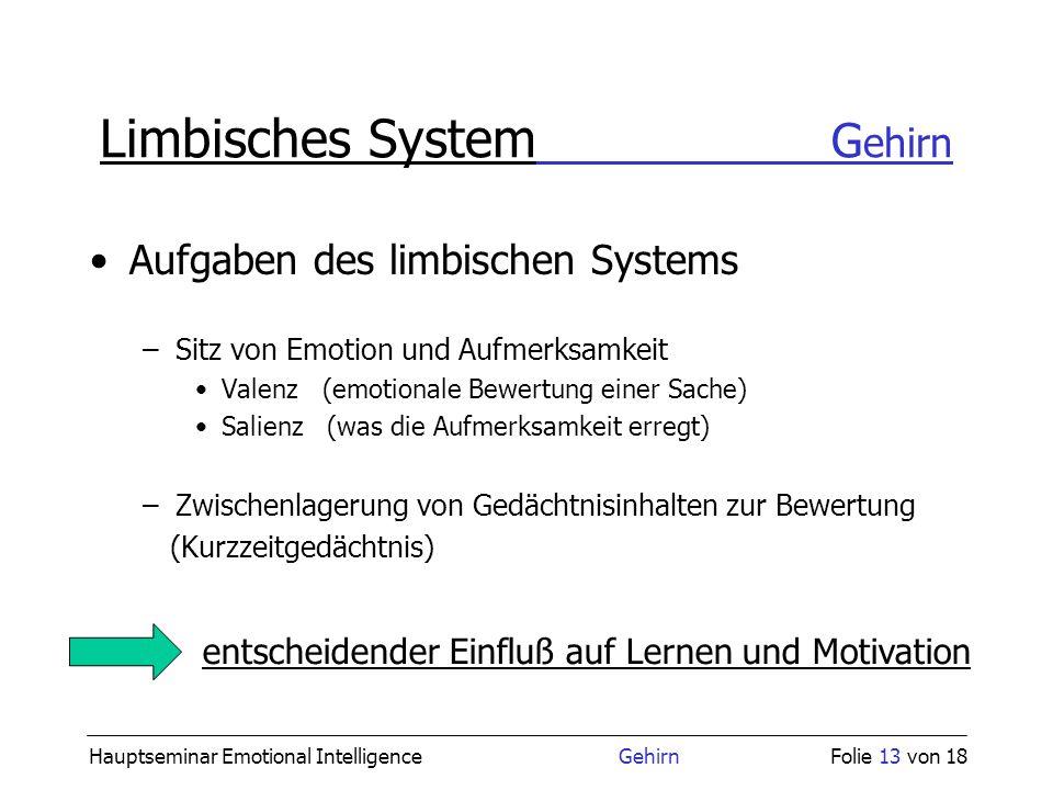 Limbisches System Gehirn
