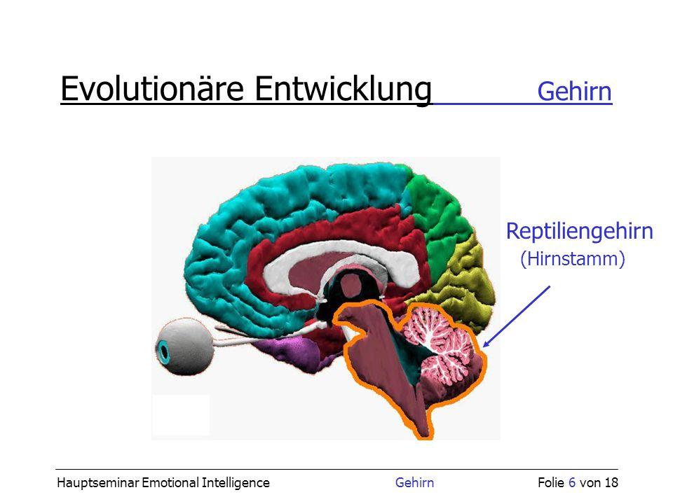 Erfreut Querschnittshirnanatomie Galerie - Anatomie Ideen - finotti.info