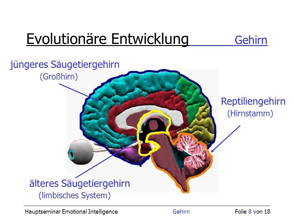Evolutionäre Entwicklung Gehirn