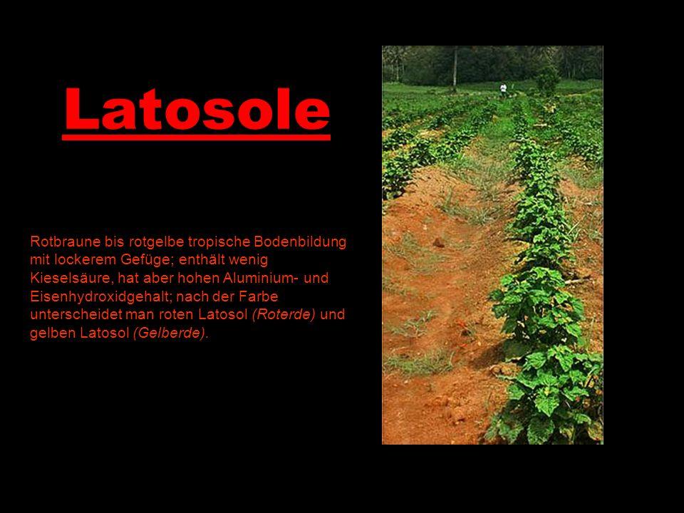 Latosole