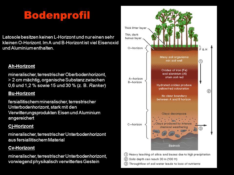 Bodenprofil Latosole besitzen keinen L-Horizont und nur einen sehr