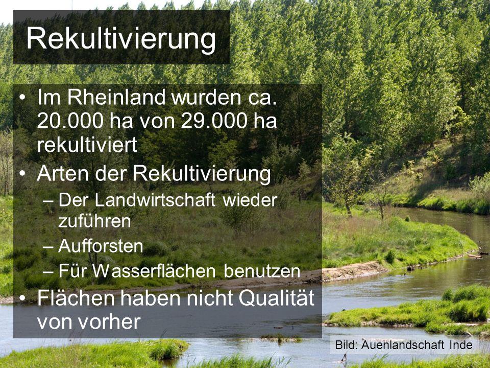 Rekultivierung Im Rheinland wurden ca. 20.000 ha von 29.000 ha rekultiviert. Arten der Rekultivierung.