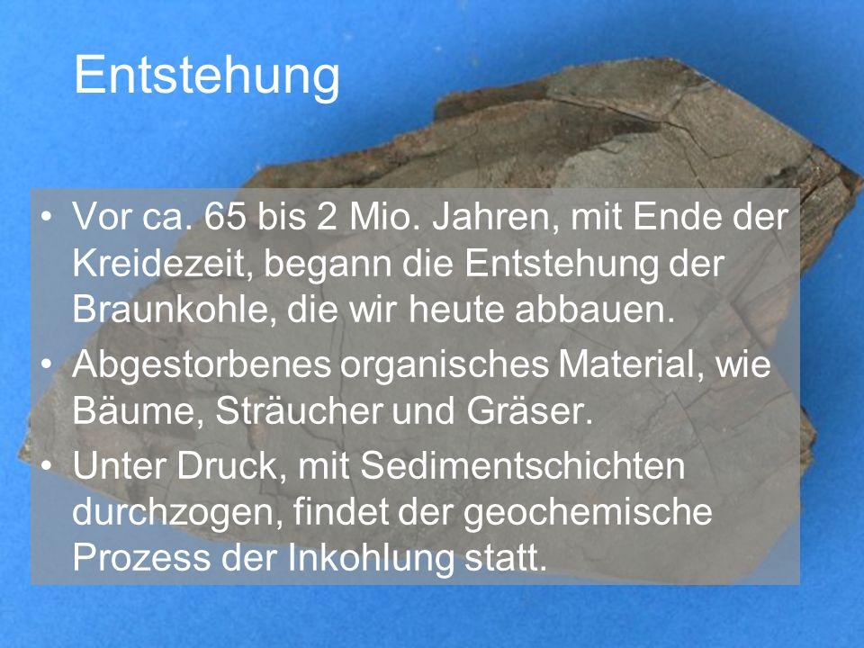 Entstehung Vor ca. 65 bis 2 Mio. Jahren, mit Ende der Kreidezeit, begann die Entstehung der Braunkohle, die wir heute abbauen.