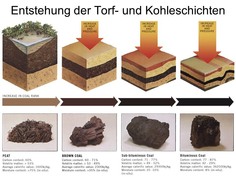 Entstehung der Torf- und Kohleschichten