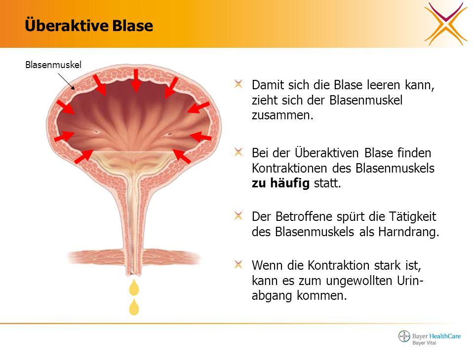 Überaktive Blase Blasenmuskel. Damit sich die Blase leeren kann, zieht sich der Blasenmuskel zusammen.