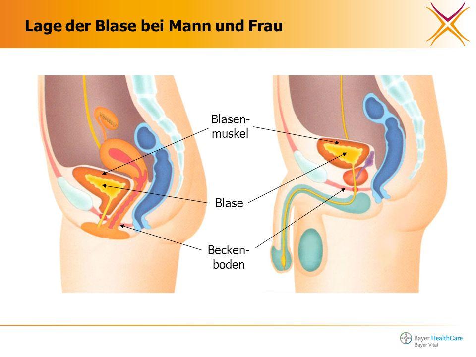 Atemberaubend Blase Lage Zeitgenössisch - Menschliche Anatomie ...