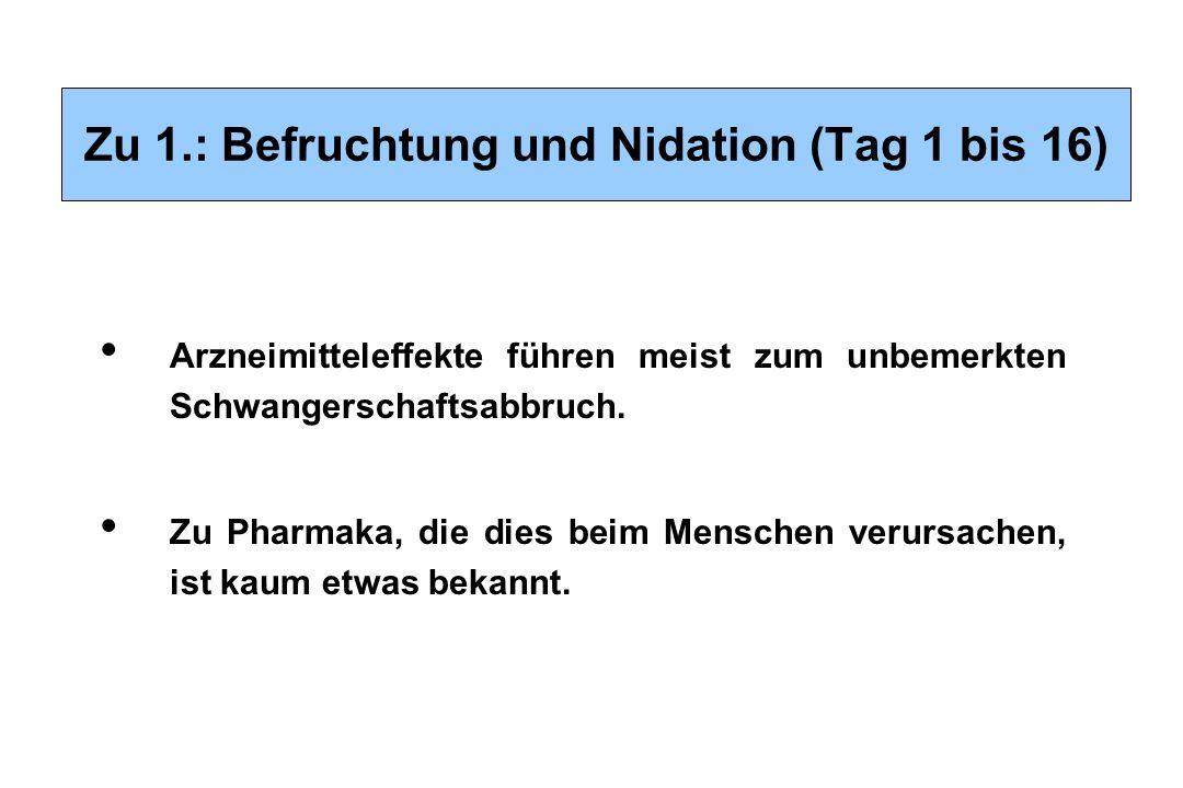 Zu 1.: Befruchtung und Nidation (Tag 1 bis 16)