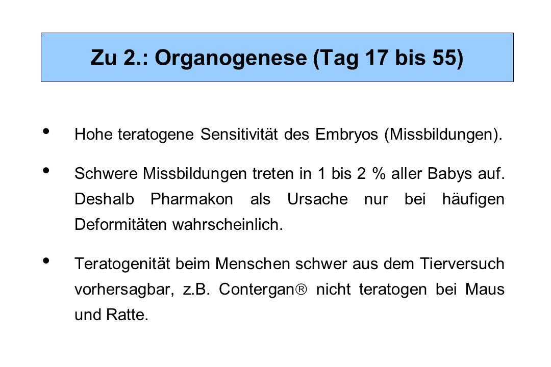 Zu 2.: Organogenese (Tag 17 bis 55)