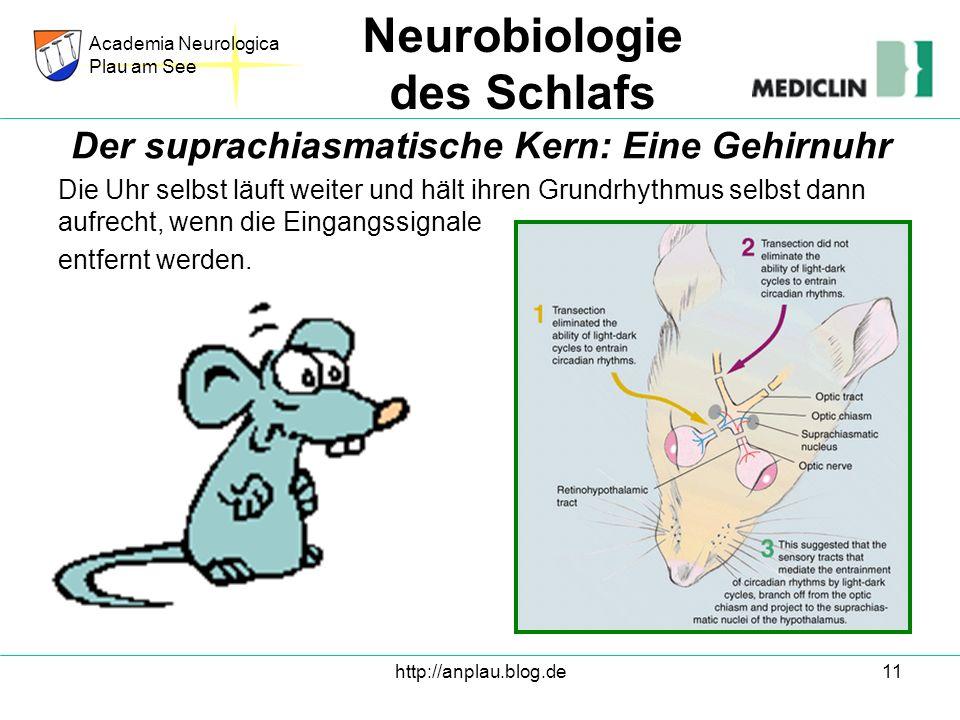 Der suprachiasmatische Kern: Eine Gehirnuhr