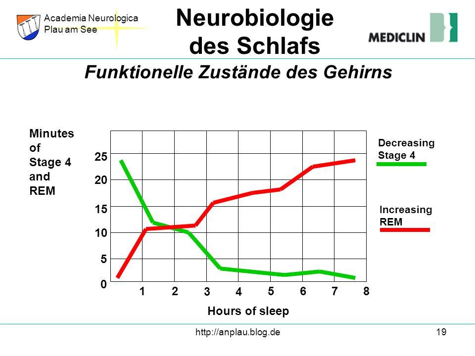 Funktionelle Zustände des Gehirns