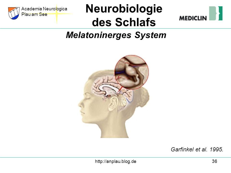 Melatoninerges System