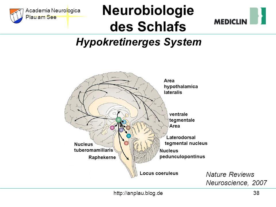Hypokretinerges System