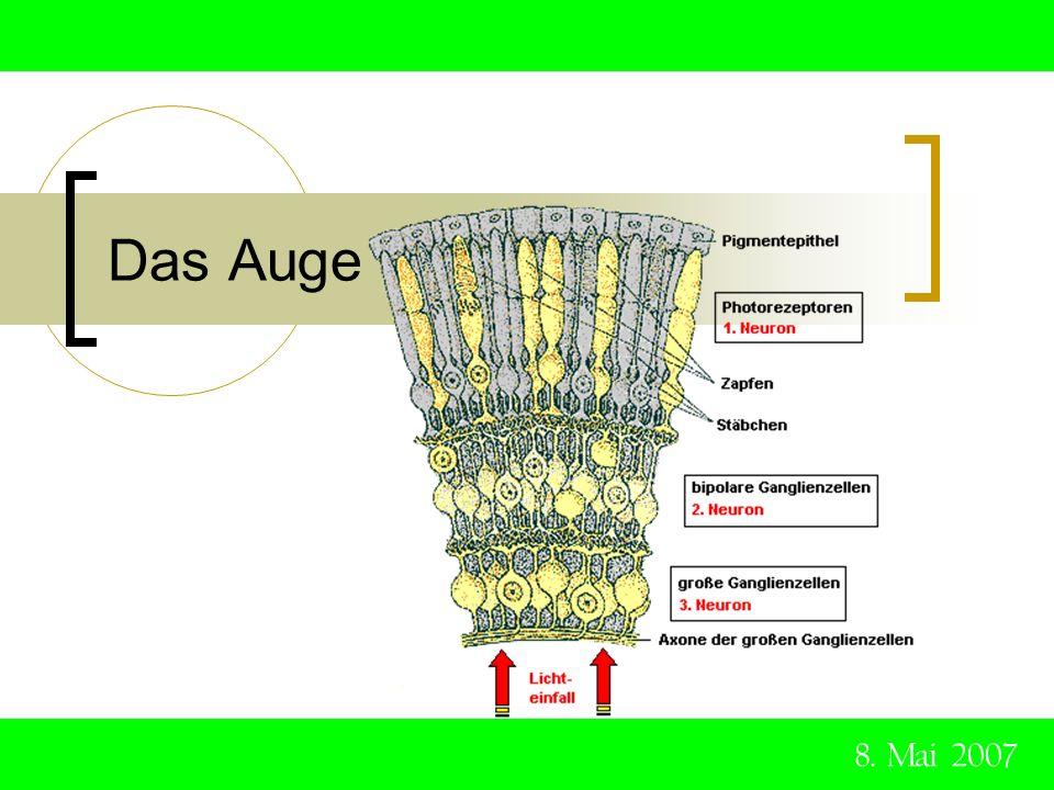 Das Auge Ganglienzellen die Nervenzellen im Zentralnervensystem, im Sympathicus und den Sinnesorganen.