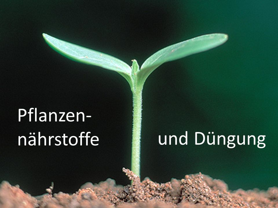 Pflanzen-nährstoffe und Düngung