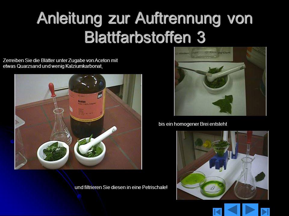 Anleitung zur Auftrennung von Blattfarbstoffen 3