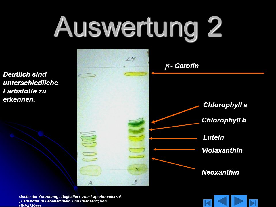 Auswertung 2  - Carotin. Deutlich sind unterschiedliche Farbstoffe zu erkennen. - Chlorophyll a.