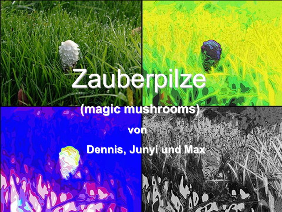 Zauberpilze (magic mushrooms) von Dennis, Junyi und Max Cover