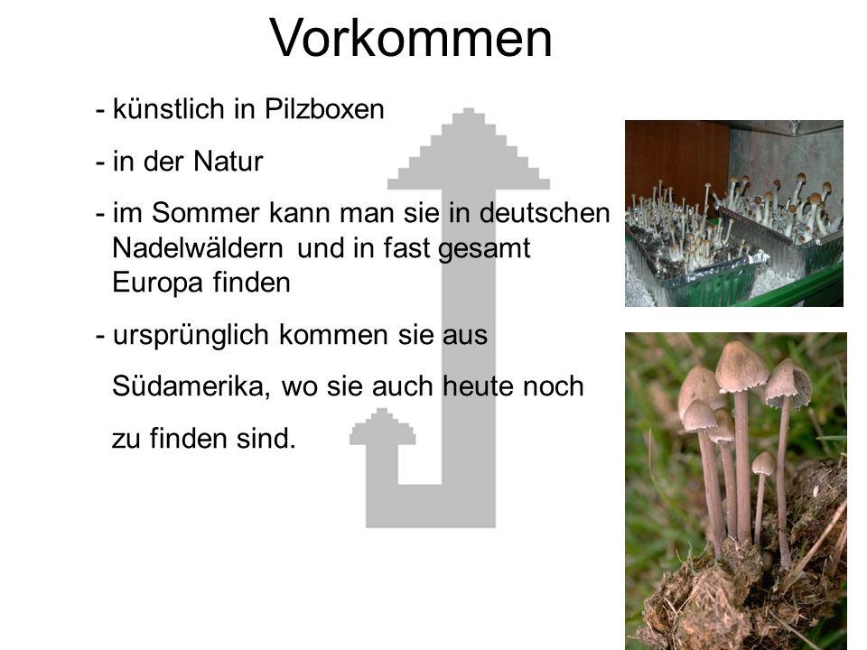 Vorkommen Vorkommen - künstlich in Pilzboxen - in der Natur
