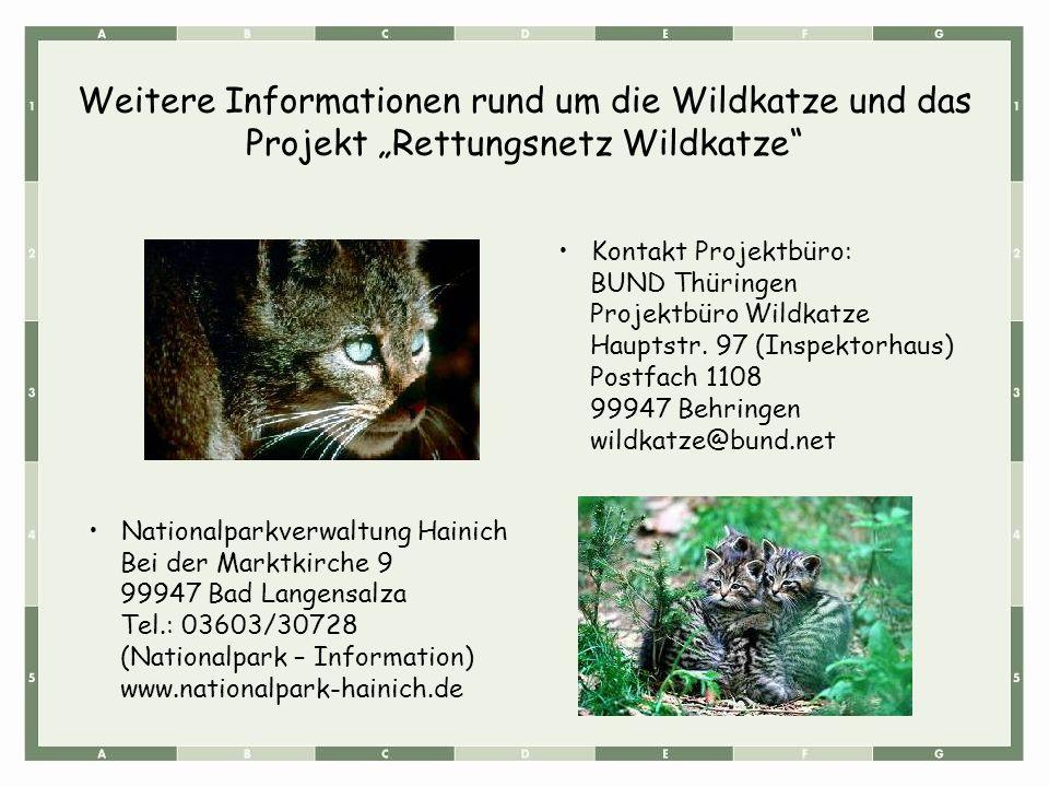 """Weitere Informationen rund um die Wildkatze und das Projekt """"Rettungsnetz Wildkatze"""