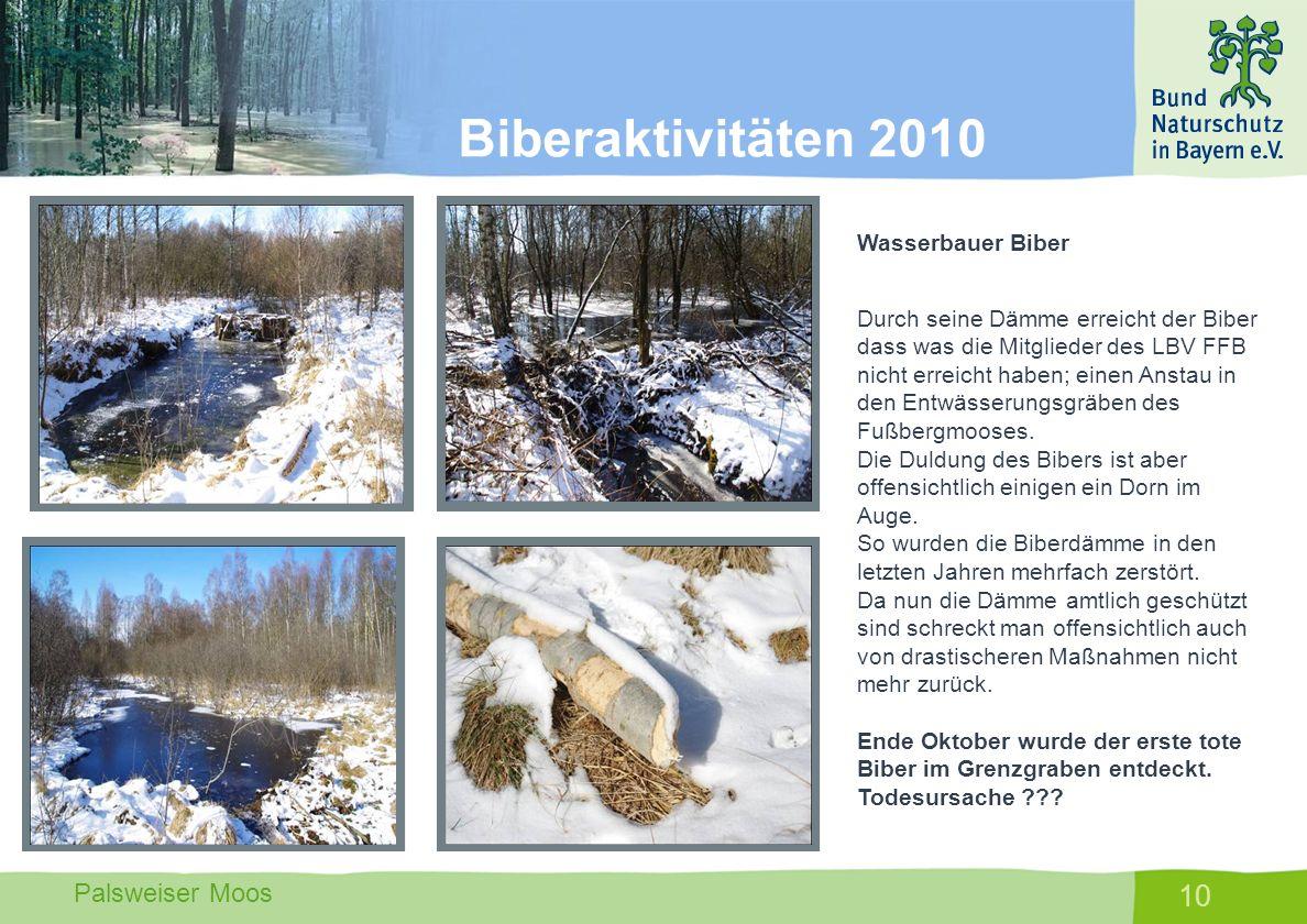 Biberaktivitäten 2010 Wasserbauer Biber