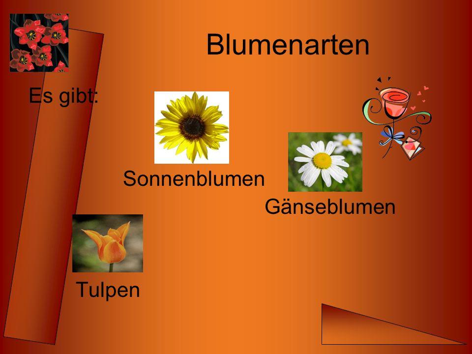 Blumenarten Es gibt: Sonnenblumen Gänseblumen Tulpen