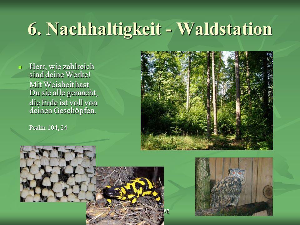 6. Nachhaltigkeit - Waldstation