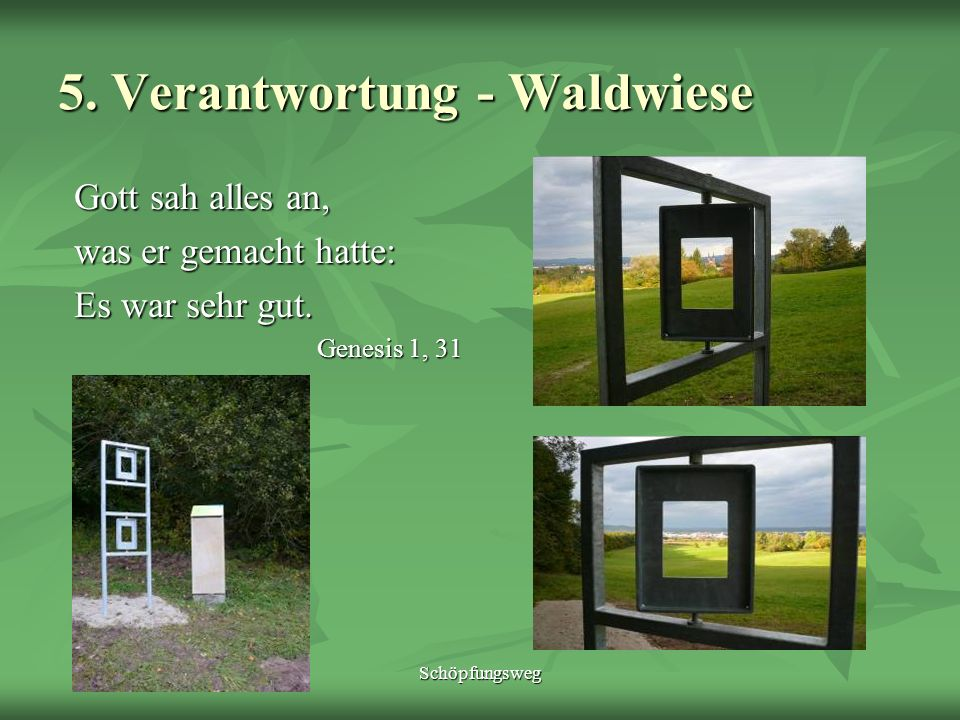 5. Verantwortung - Waldwiese