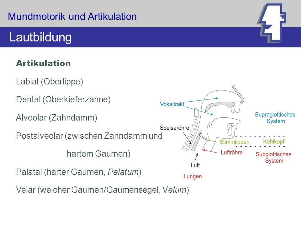 Lautbildung Mundmotorik und Artikulation Artikulation