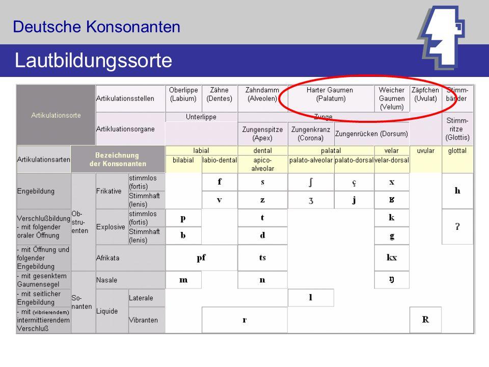 Deutsche Konsonanten Lautbildungssorte