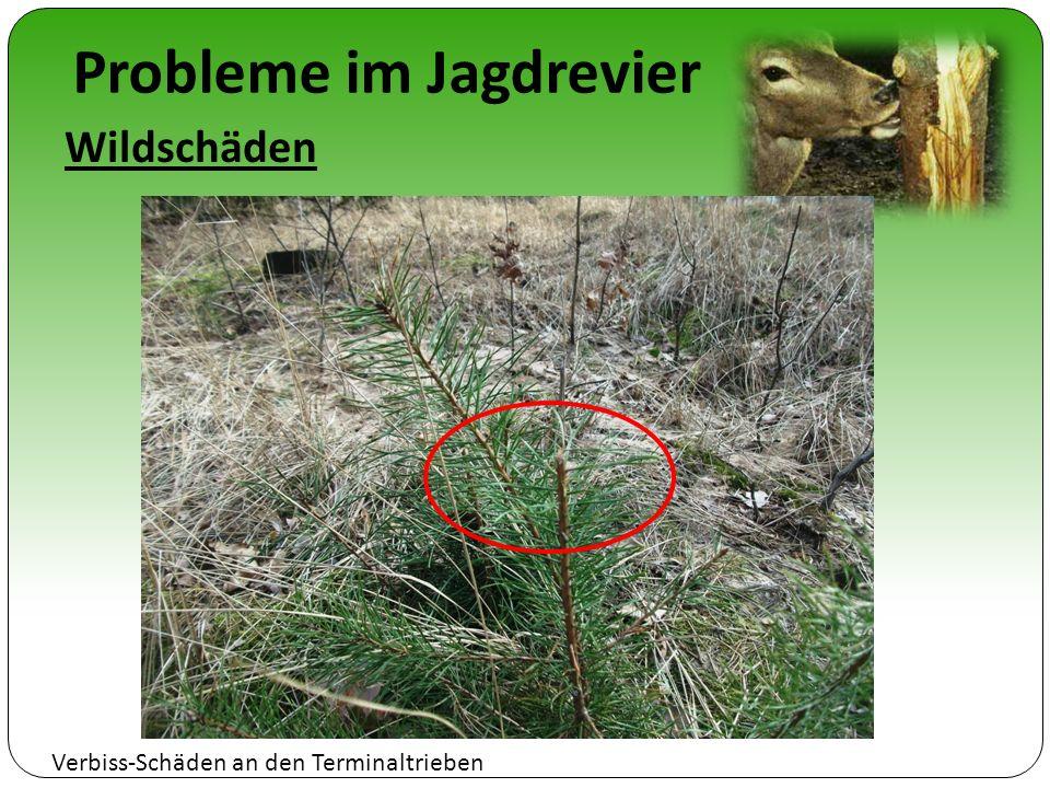 Probleme im Jagdrevier