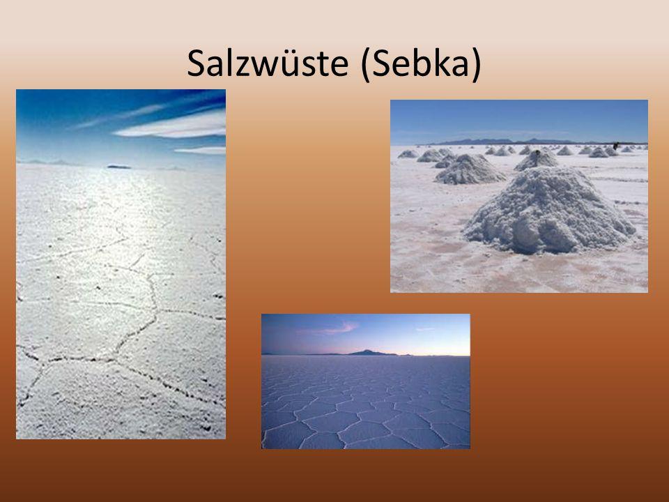 Salzwüste (Sebka)