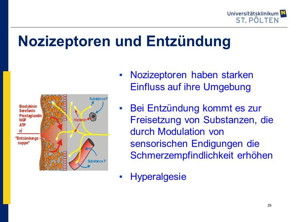 Nozizeptoren und Entzündung