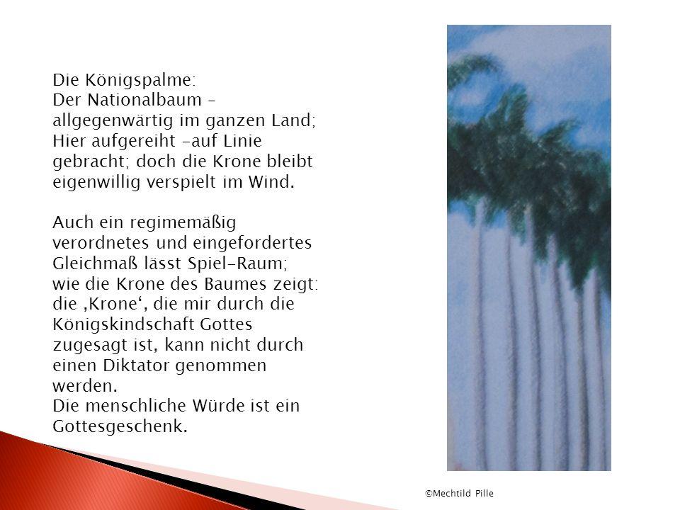 Der Nationalbaum – allgegenwärtig im ganzen Land;