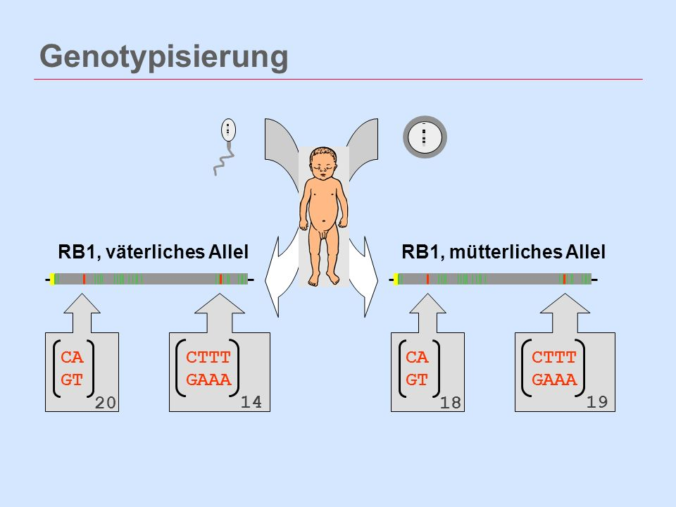 Genotypisierung RB1, väterliches Allel RB1, mütterliches Allel CA GT