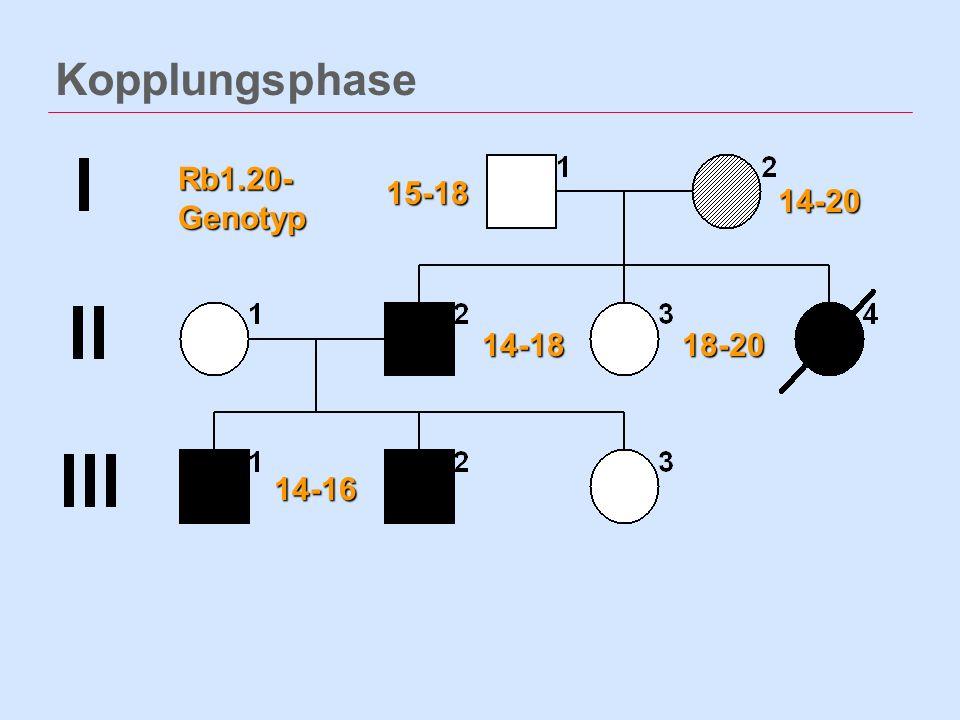 Kopplungsphase Rb1.20- Genotyp 15-18 14-20 14-18 18-20 14-16