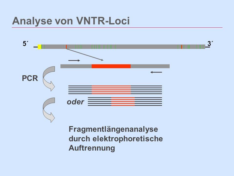 Analyse von VNTR-Loci PCR oder