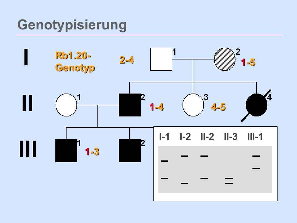 Genotypisierung Rb1.20- Genotyp 2-4 1-5 1-4 4-5 I-1 I-2 II-2 II-3