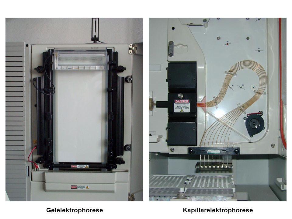 Gelelektrophorese Kapillarelektrophorese