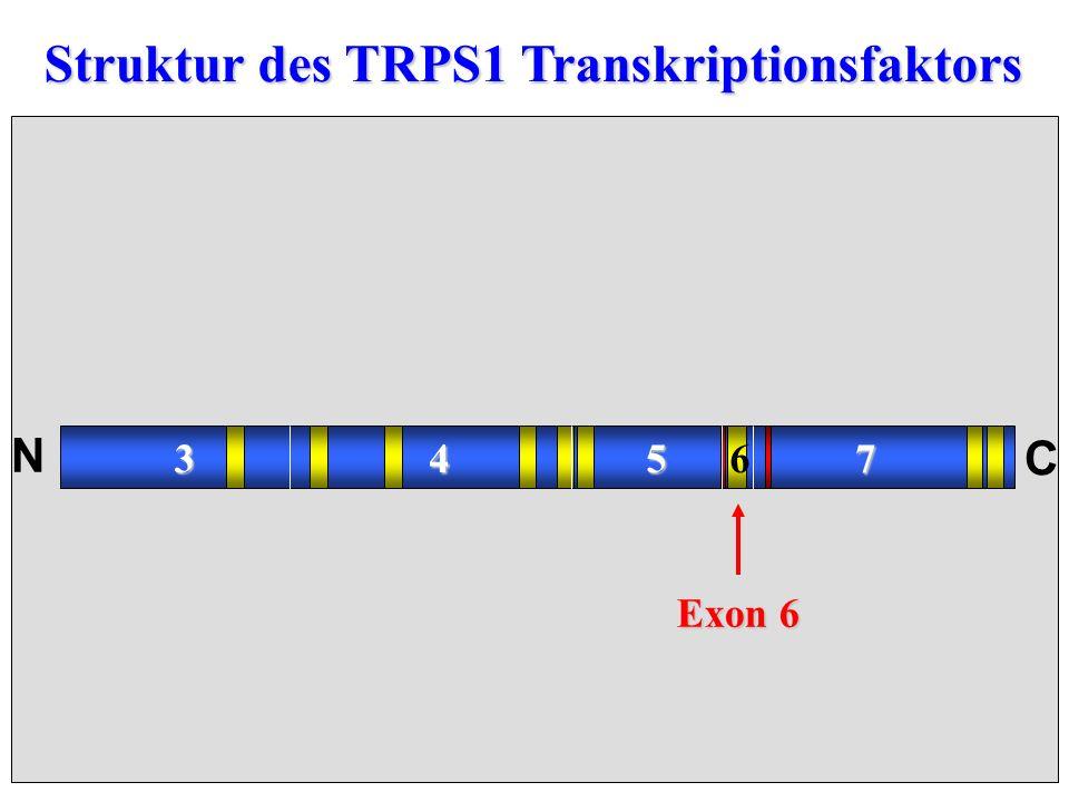 Struktur des TRPS1 Transkriptionsfaktors