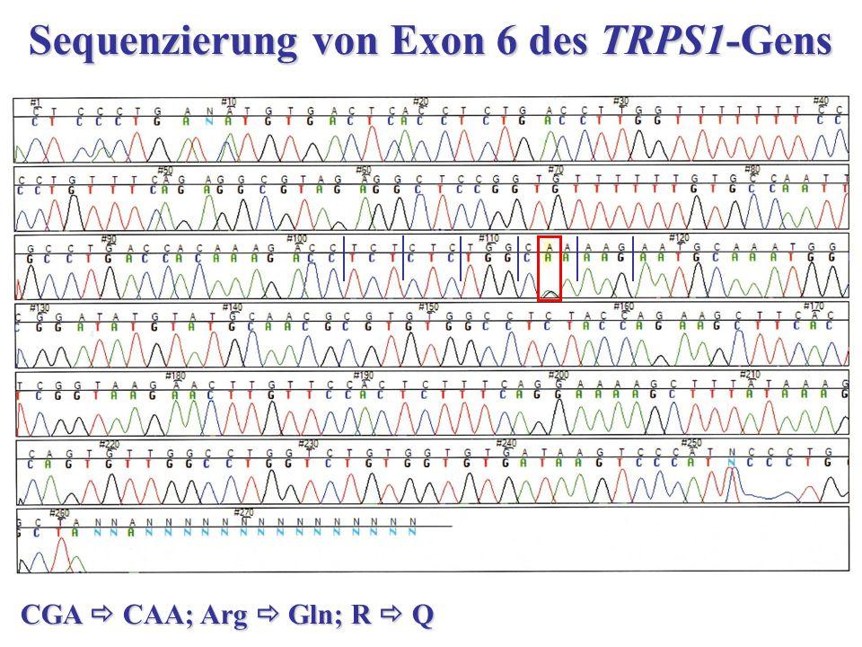 Sequenzierung von Exon 6 des TRPS1-Gens