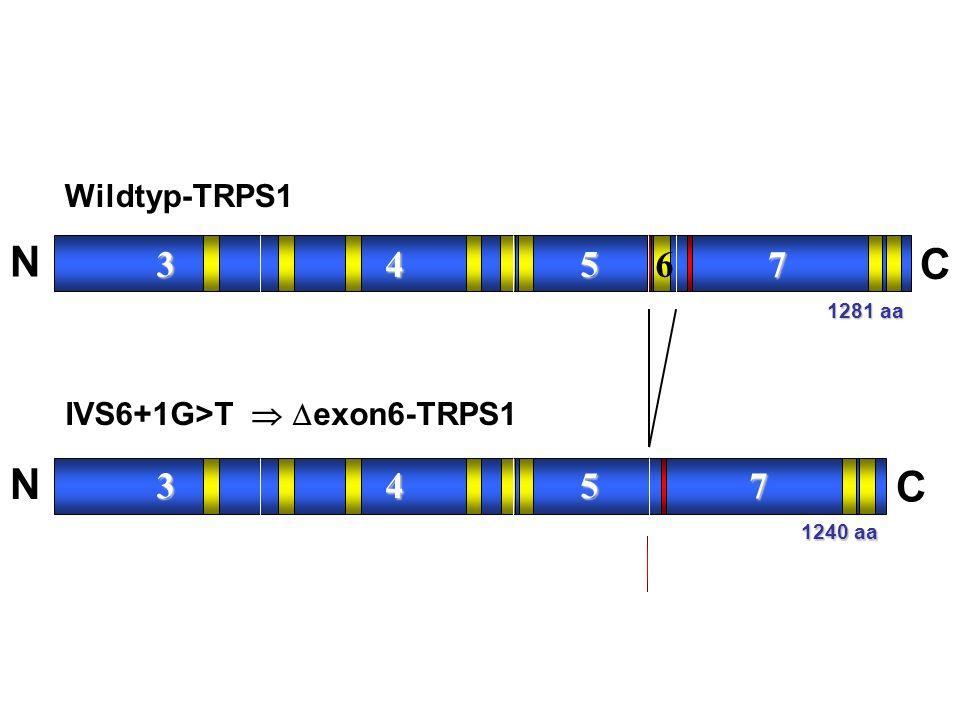 N C 3 4 5 6 7 Wildtyp-TRPS1 IVS6+1G>T  exon6-TRPS1 1281 aa