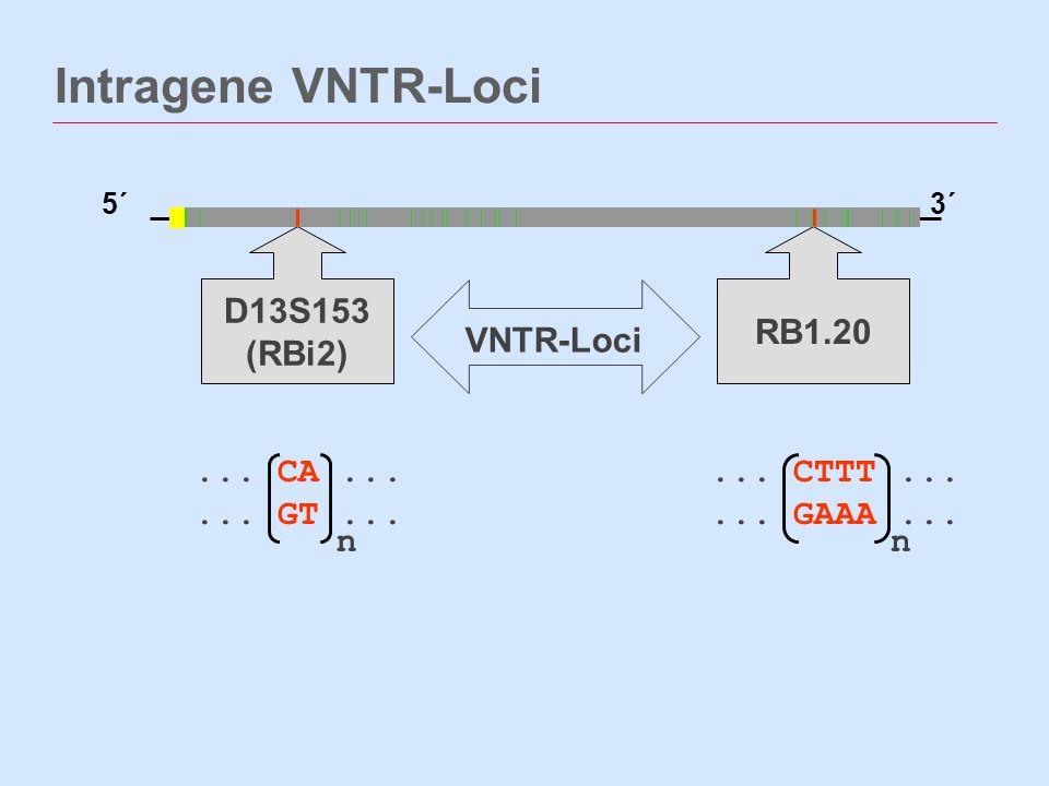 Intragene VNTR-Loci D13S153 (RBi2) RB1.20 VNTR-Loci