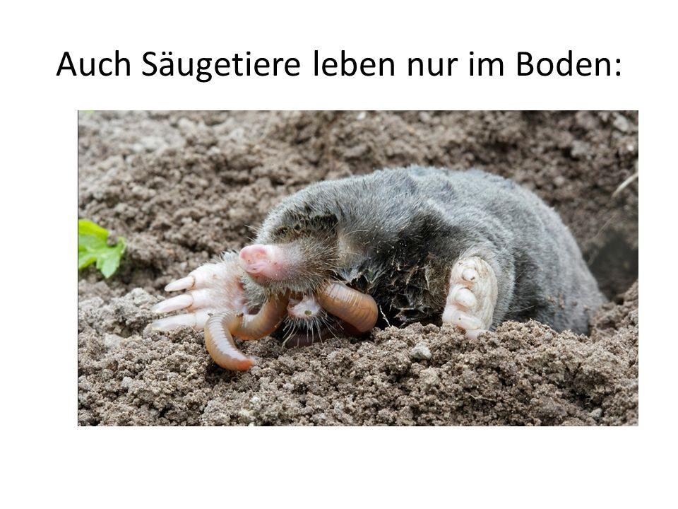 Auch Säugetiere leben nur im Boden: