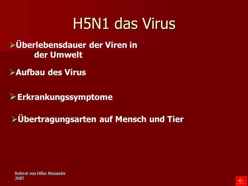 H5N1 das Virus Erkrankungssymptome