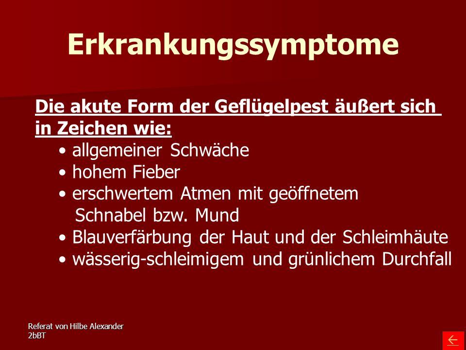 Erkrankungssymptome Die akute Form der Geflügelpest äußert sich